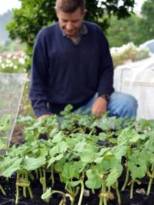 Luis observa cómo va la germinación de sus fabes
